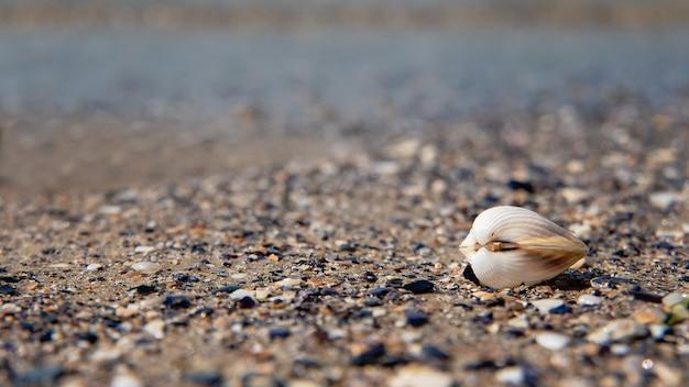 Shell em terra nas ondas do mar, no pôr do sol. copie o espaço para texto. conceito de férias de verão.