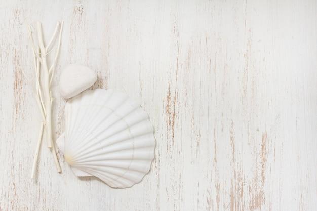 Shell na superfície de madeira branca