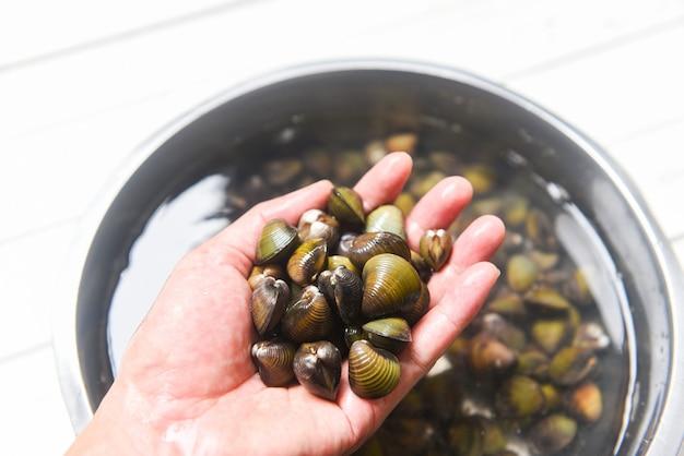 Shijimi bivalve de água doce de molusco como concha de molusco