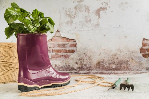 Showplant na bota de borracha roxa wellington com corda e ferramentas de jardinagem contra uma parede velha