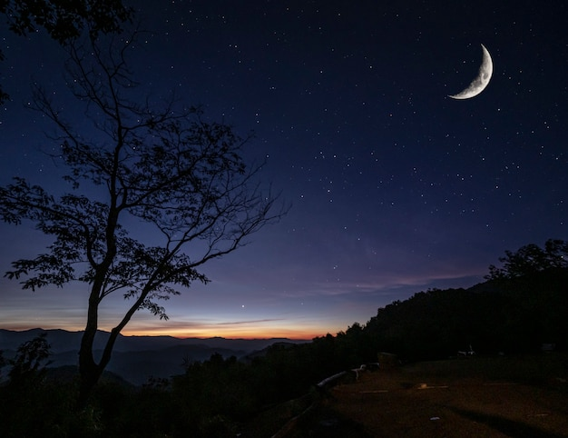 Silhueta da árvore no topo do ponto de vista da montanha contra muitas estrelas com lua croissant e pouca luz solar no início da manhã, paisagem vista no conceito de turismo natural