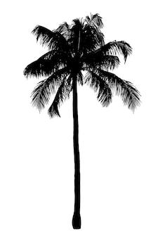 Silhueta da palmeira negra isolada. objeto da natureza