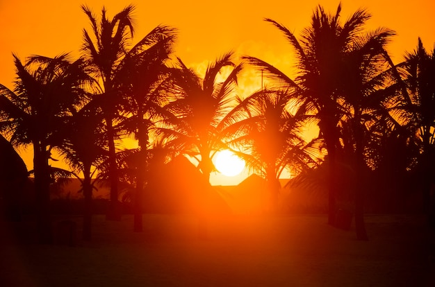 Silhueta das palmeiras ao pôr do sol.