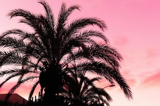 Silhueta das palmeiras no tempo do por do sol em cores roxas.