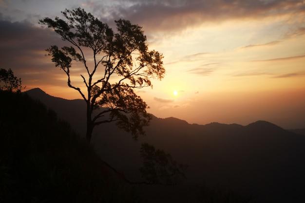 Silhueta de árvore bonita na montanha