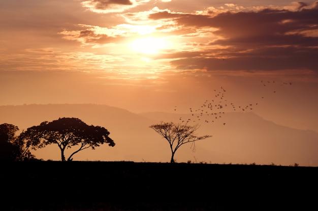 Silhueta de árvore com sol laranja no céu
