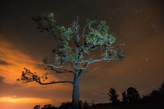 Silhueta de árvore iluminada por flash sob o céu noturno com nuvens e estrelas