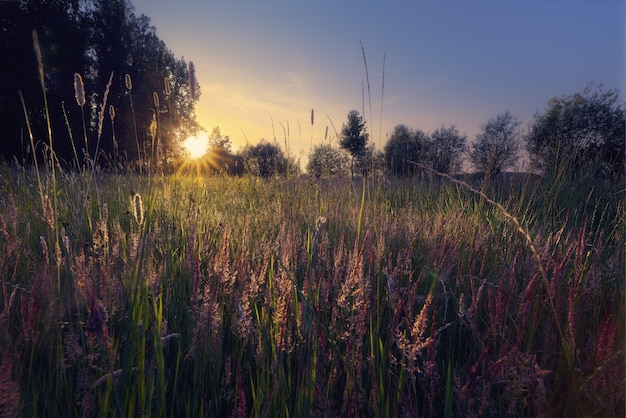 Silhueta de árvores em um campo gramado com um sol brilhante ao fundo