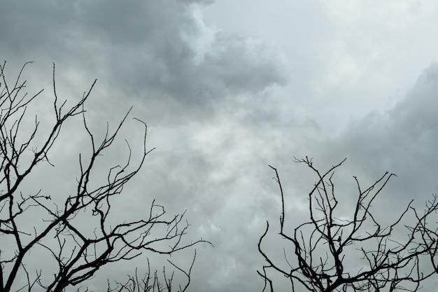 Silhueta de árvores mortas em um céu escuro e dramático e nuvens cinzentas