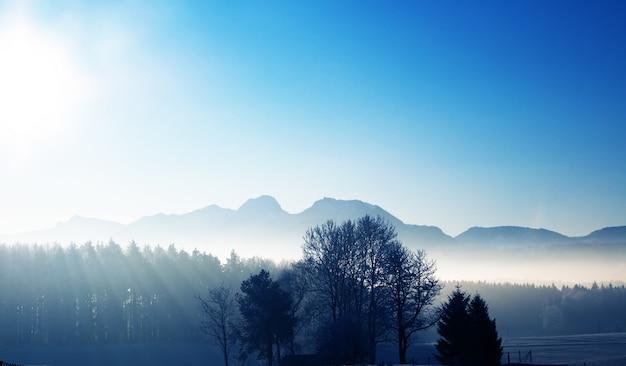 Silhueta de árvores no nascer do sol