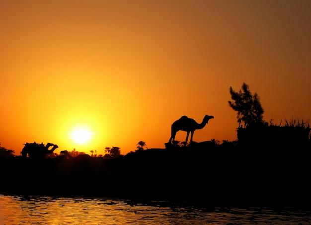 Silhueta de camelo contra o pôr do sol no nilo