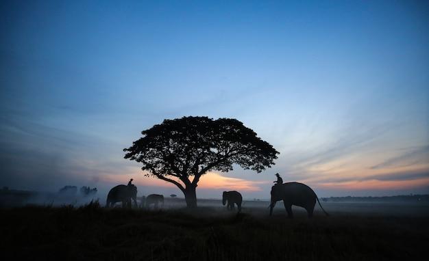 Silhueta de elefante e árvore no fundo do pôr do sol elefante asiático em surin, tailândia