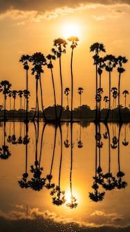 Silhueta de fazenda de palmeiras de açúcar com reflexo natural na lagoa de água ao nascer do sol, dongtan samkok, pathum thani, tailândia. destino de viagem famoso do país quente, siam. fundo vertical do telefone.