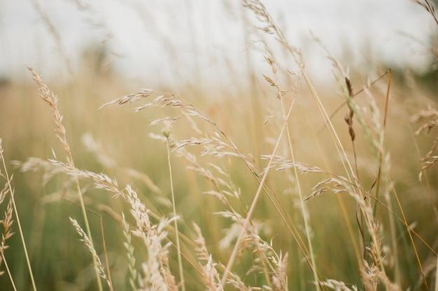 Silhueta de flores de grama, bela paisagem de verão com natureza rural