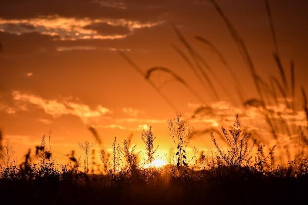 Silhueta de flores do campo ao pôr do sol