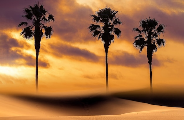 Silhueta de palmeiras ao pôr do sol africano