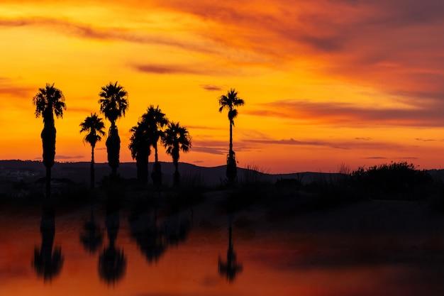 Silhueta de palmeiras ao pôr do sol