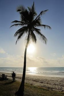 Silhueta de palmeiras na bela praia tropical ao pôr do sol