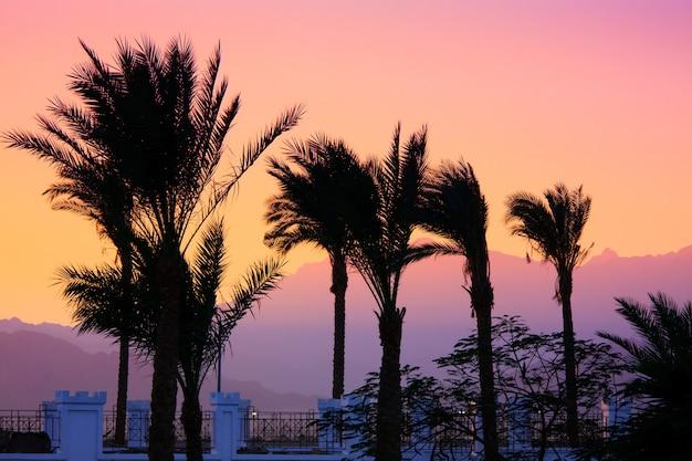 Silhueta de palmeiras