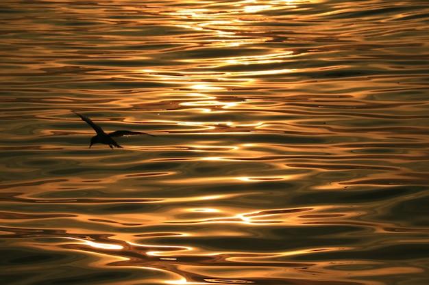 Silhueta de pássaro contra a superfície da água do mar com ondulações suaves em reflexões de luz do sol de manhã