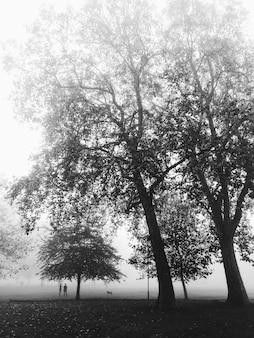 Silhueta de pessoas irreconhecíveis e forest park na névoa da europa.