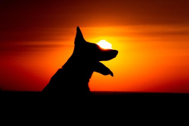 Silhueta de retrato de cachorro pastor alemão ao pôr do sol
