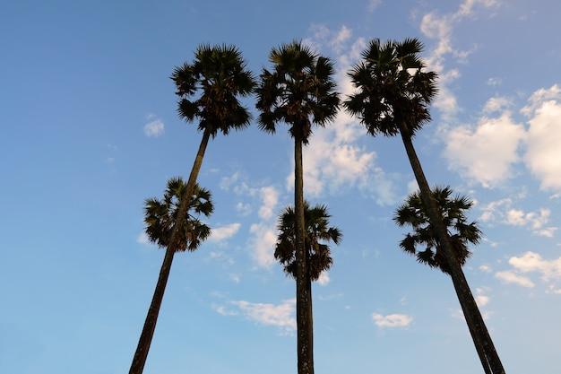Silhueta de seis palmeiras ao pôr do sol