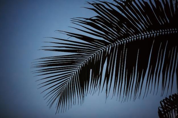 Silhueta de sombra preto e branco de palmeira coco de folha bonita na natureza da praia borrão padrão escuro ramo no dia tropical, vintage, férias de verão