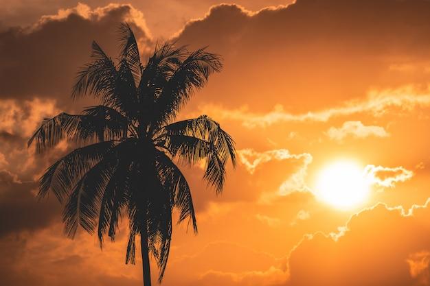 Silhueta de um coqueiro com fundo por do sol