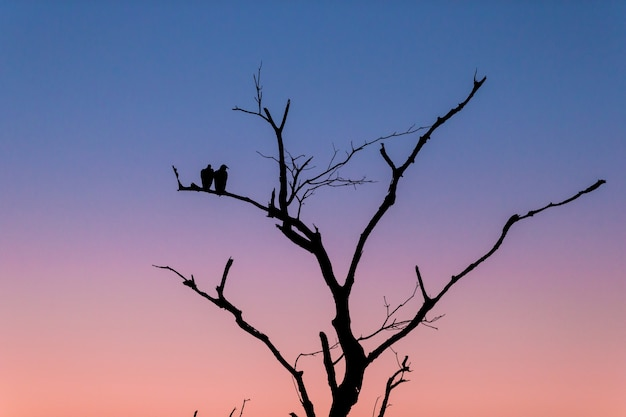 Silhueta de uma árvore com dois pássaros em pé no galho durante o pôr do sol à noite