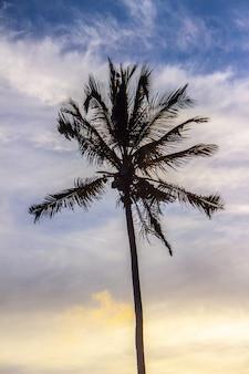 Silhueta de uma árvore de coco na praia de ipanema.