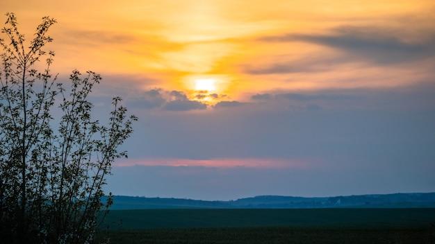 Silhueta de uma árvore em um fundo de céu pitoresco durante o pôr do sol