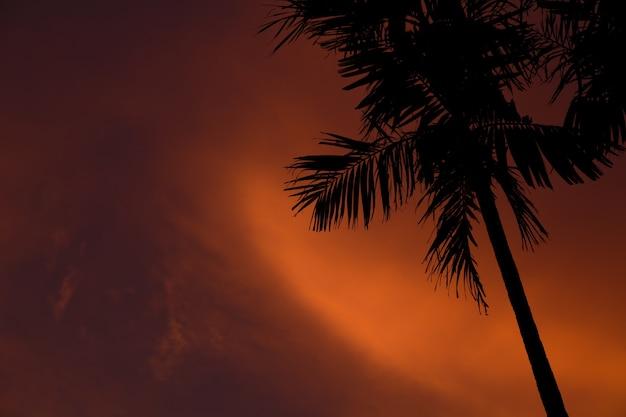 Silhueta de uma palmeira com um cenário de pôr do sol e um céu laranja