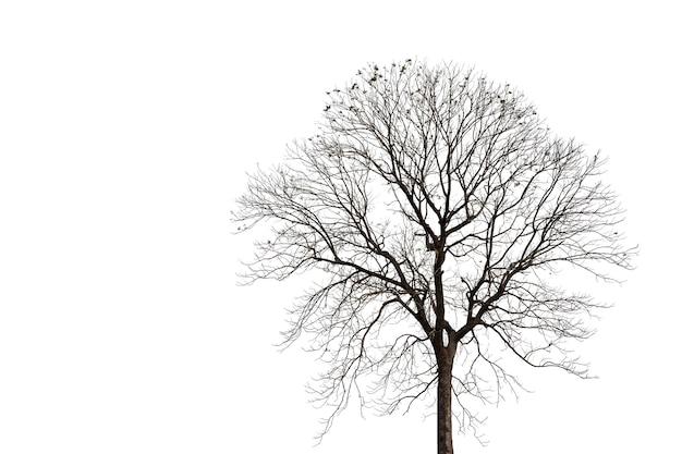 Silhueta de uma velha árvore morta com traçado de recorte isolado no branco