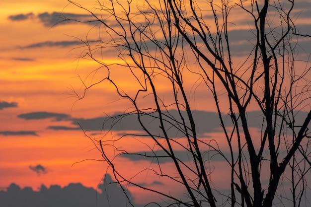 Silhueta do ramo de árvore com por do sol, fundo de dia das bruxas.