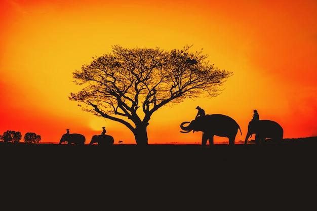 Silhueta, estilo de vida de pessoas e elefantes.