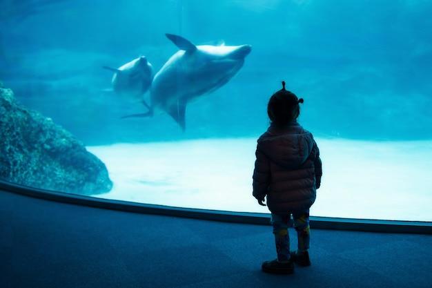 Silhueta menina assistir natação golfinho