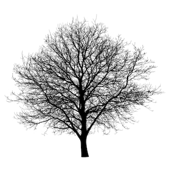 Silhueta negra da árvore isolada. objeto da natureza