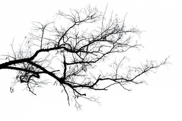 Silhueta negra de um galho de árvore em um fundo claro