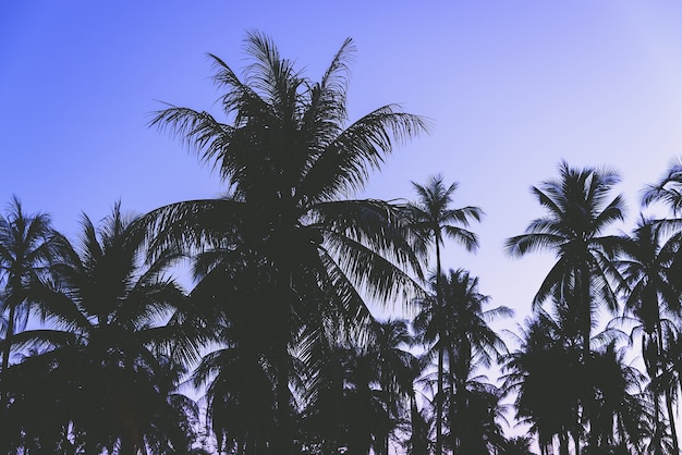Silhueta, palma, árvore