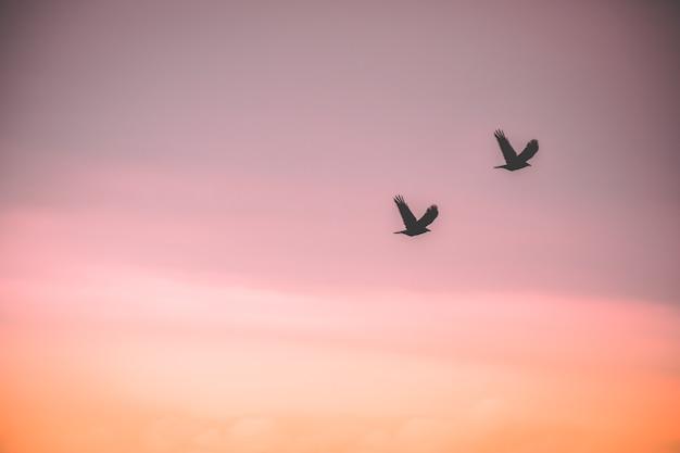 Silhuetas casal pássaro voam no ar de volta para casa