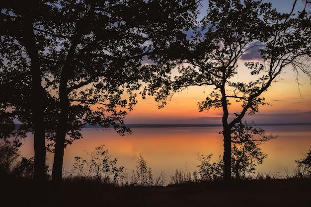 Silhuetas de árvores antes de um pôr do sol rosa colorido sobre o mar