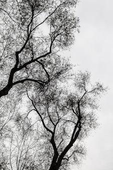 Silhuetas de árvores em preto e branco
