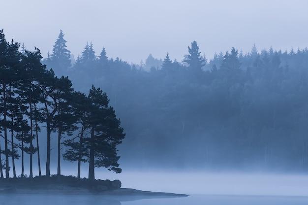Silhuetas de árvores na margem do lago em um dia de neblina