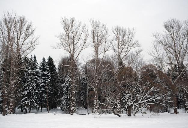 Silhuetas de árvores nuas e cobertas de neve