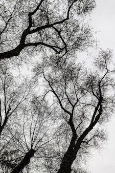 Silhuetas de árvores, preto e branco