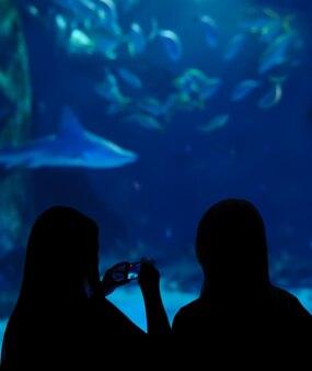 Silhuetas de duas meninas fazendo tiro móvel no aquário
