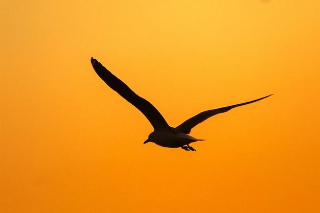 Silhuetas de gaivotas voando acima do pôr do sol. com uma linda laranja