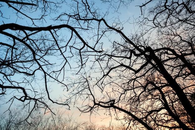 Silhuetas de galhos de árvores com o céu. pôr do sol. plano de fundo para o projeto