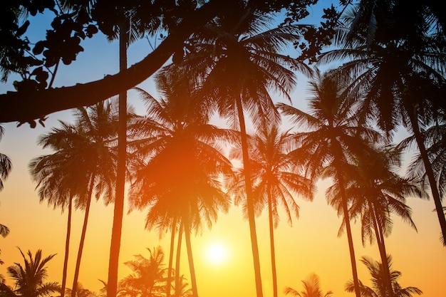 Silhuetas de palmeiras contra o céu durante um pôr do sol tropical